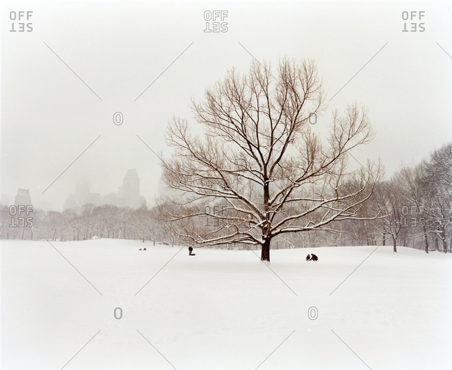 Three People And A Tree