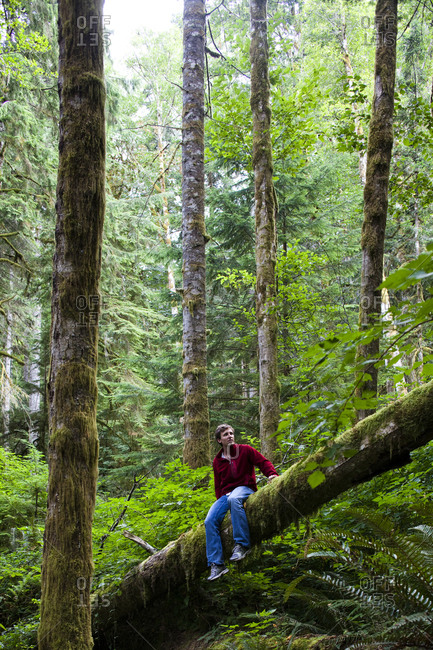 A man sits on a log in the thick green forest of the Olympic National Park.