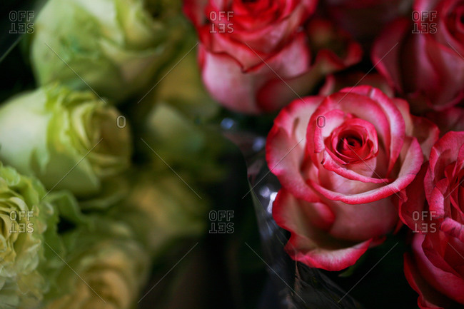 Close-up of roses wrapped in cellophane