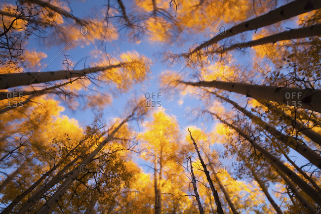view of the sky from the bottom of the forest