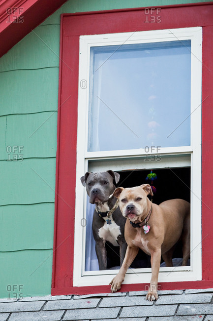 Two dogs looking out from window in City of Missoula, Montana