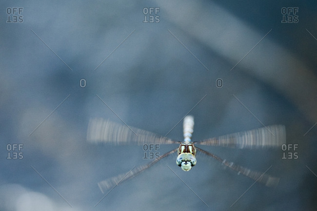 Close-up of dragonfly in flight