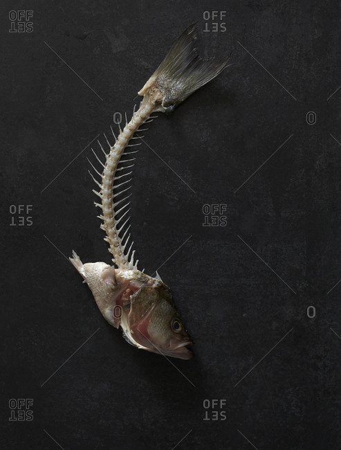 Fish bones with head and tail on black background