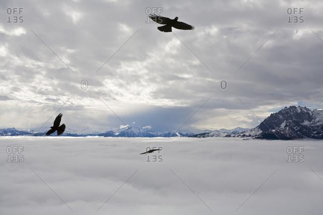 Eisriesenwelt, Eagles in flight