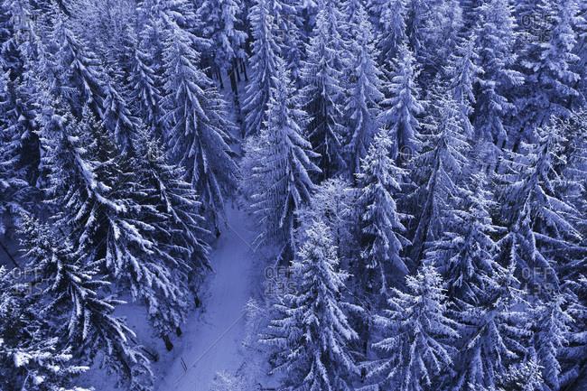 Austria, Strass, Lichtenberg, Klauswald, View of snow covered forest