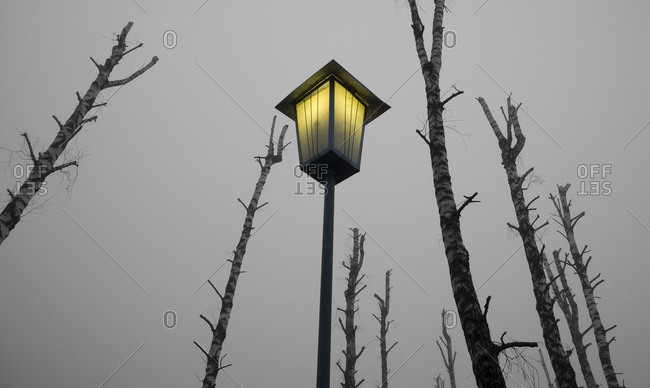 Austria, Salzkammergut, Mondsee, Bare trees and lighted street lamp, low angle view