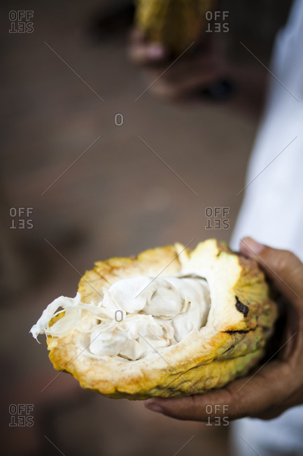 A man holds open a cut pod of cacao with a machete in the coastal town of choroni, venezuela