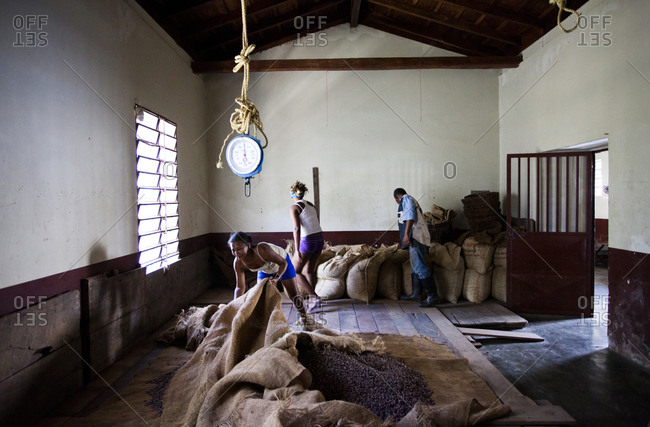 Cacao workers works in a warehouse with piles of cacao beans in the small, remote village of chuao, venezuela