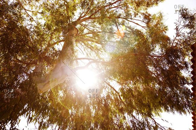 Sun beams through tree branches