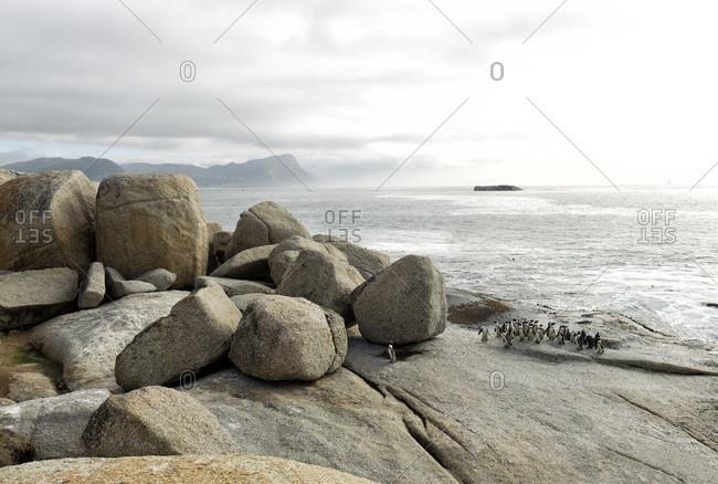 Penguins, Boulders Beach, Cape Peninsula, Western Cape, Cape Province, South Africa