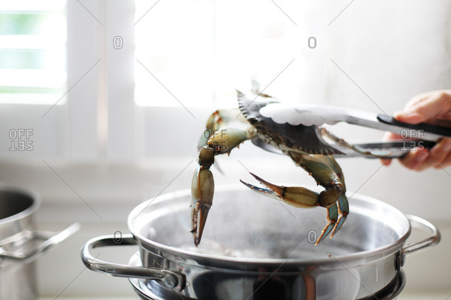 Sticking crab with tongs into boiling water
