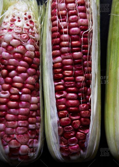 close up of purple corn on the cob