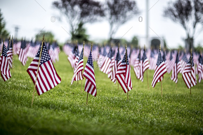 Close up of rows of little flags in the grass