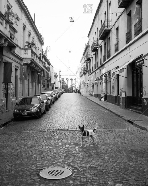Dog standing on empty street in Buenos Aires, Argentina