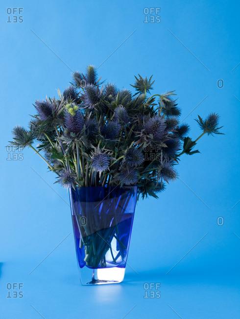 Blue thistle bouquet against blue background