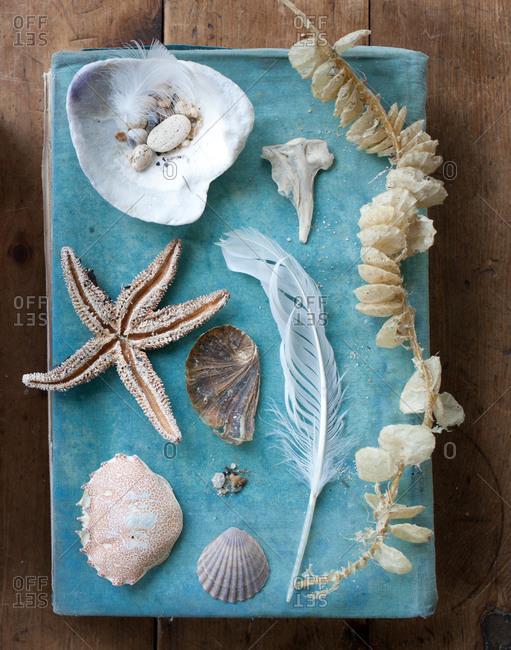 High angle view of seashell collection