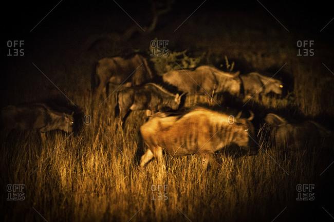 Wildebeest Cave Painting