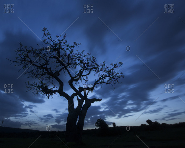 Silhouette of tree in Maasai Mara National Reserve, Kenya