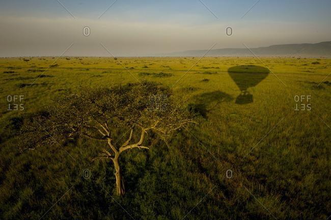 Grassland with shadow of a hot air balloon in Maasai Mara National Reserve, Kenya