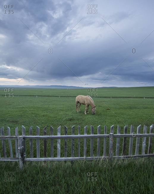 Horse grazing in field in Mongolia