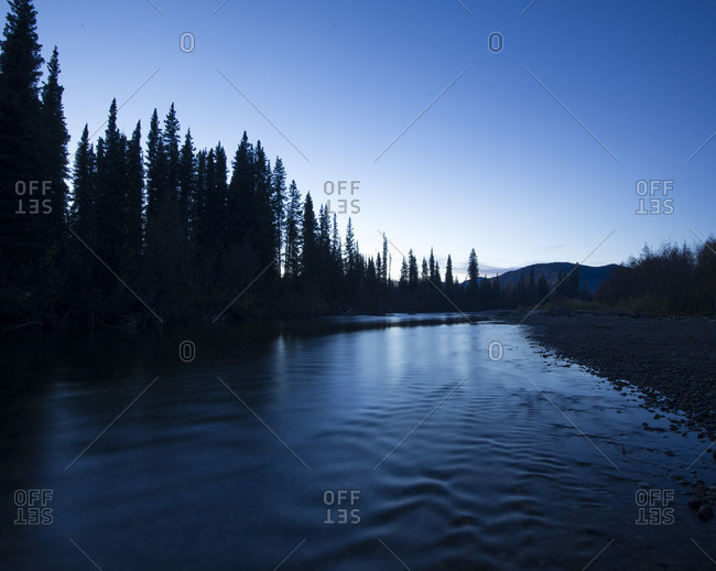 Pine trees on lake shore in Yukon Territory, Canada
