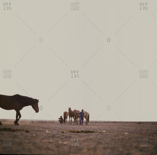 Horses grazing in Gobi desert in Mongolia