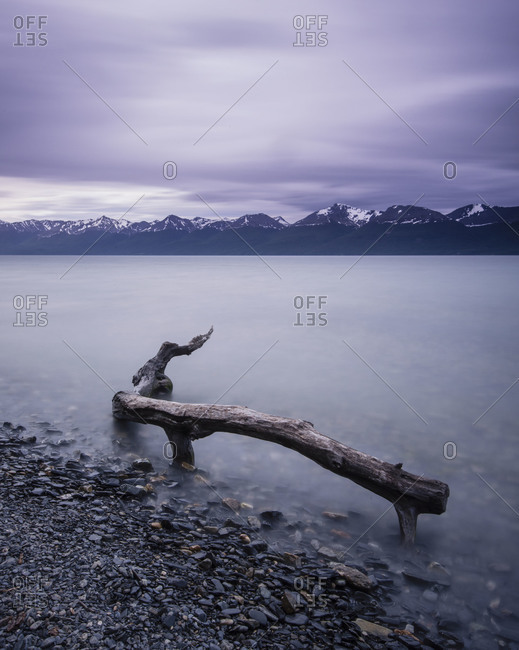 Driftwood in water at the shore of  Tierra del Fuego in Patagonia, Argentina