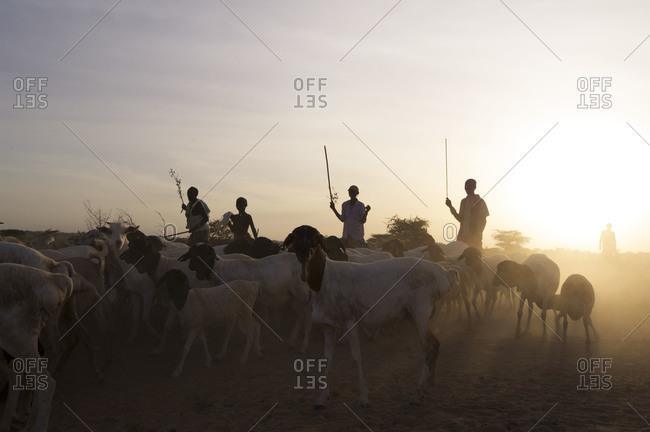 Masaai herdsmen shepherding goats in Kenya, Africa.
