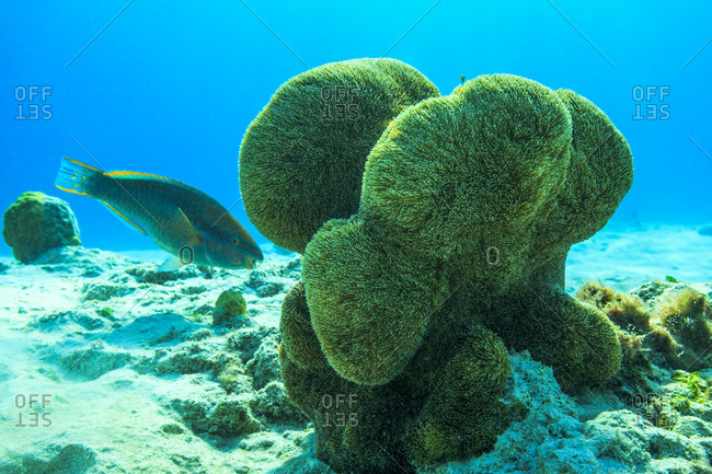 coral growing around bonaire waters