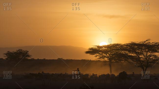 Silhouette of Masaai herdsmen shepherding goats.