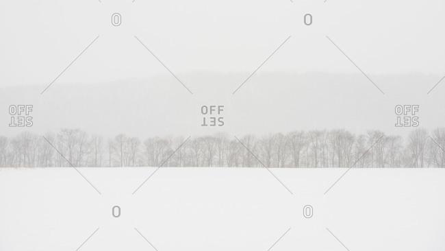 Tranquil winter landscape in Hokkaido, Japan