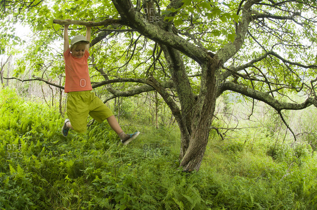 A young girl swinging on a maple tree branch in the Black Mountains, Pisgah National Forest, Burnsville, North Carolina.