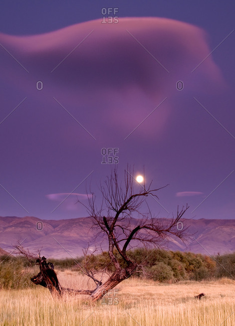 Full Moon rising over the White Mountains with cloud and tree.  Owens River, Eastern Sierra, California