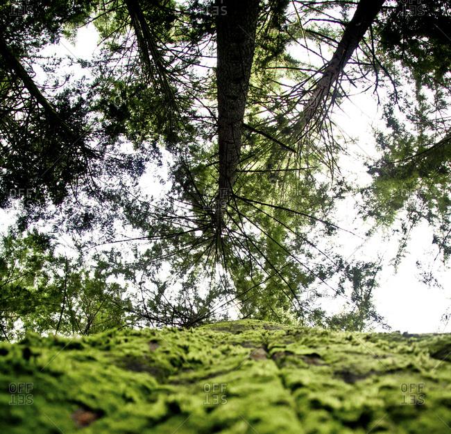 Nature Detail.