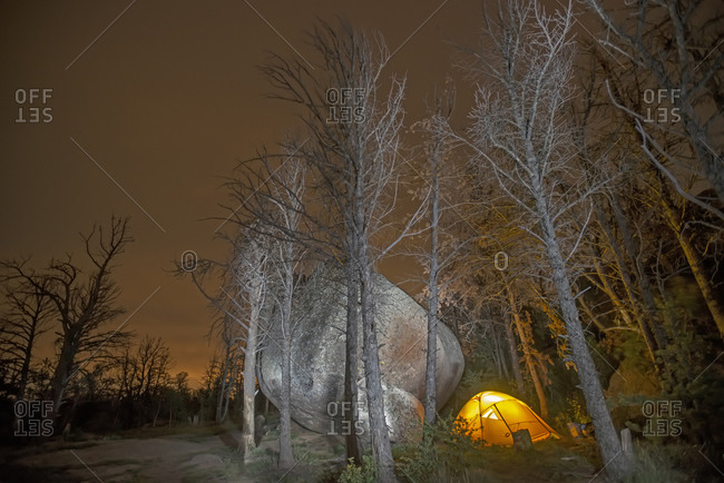 Tent next to large boulder and ghostly forest killed by pine beetle.