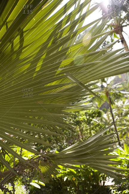 Palm leaves in Rayavadee, Krabi situated on southern Thailand�s Andaman coast