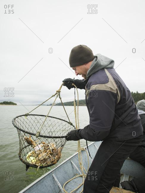 Man pulling net full of crabs