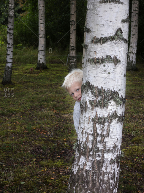 Boy hiding behind birch tree