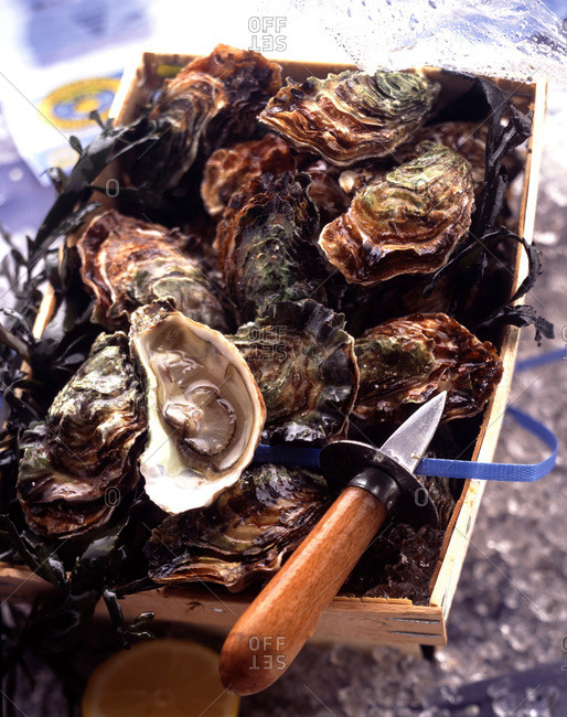 Crate of oysters and oyster knife