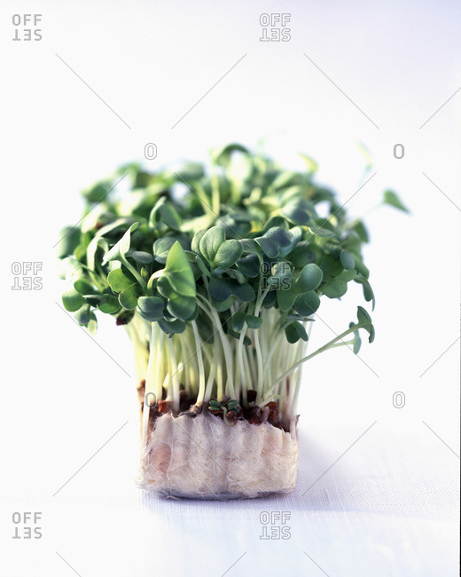 Organically grown watercress