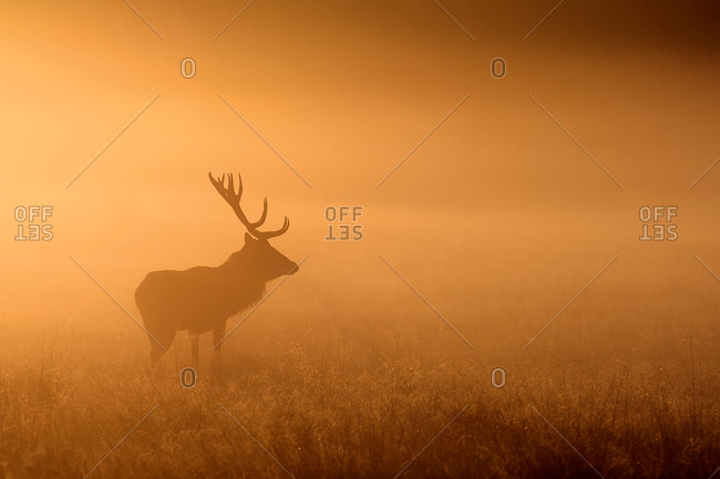 Deer standing in the mist