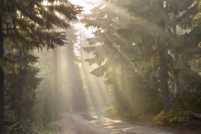 USA,  Oregon,  Willamette National Forest, sun rays illuminate a foggy forest and road