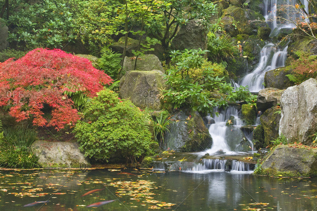 Waterfall gardens stock photos offset for Portland japanese garden koi