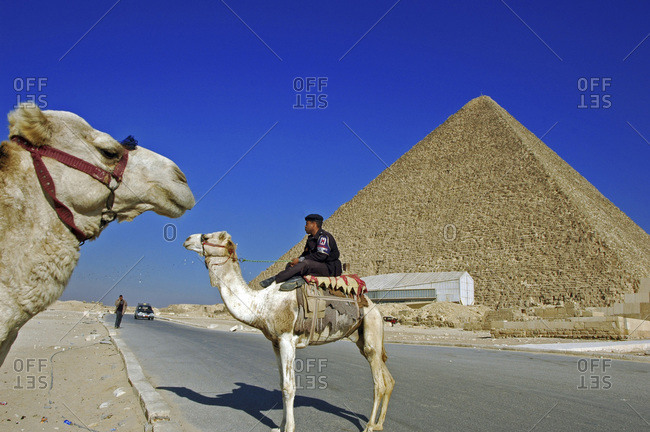 EGYPT, Giza. Egyptian policeman riding a white camel; a pyramid in the background, in Giza