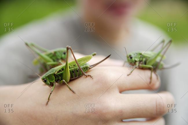 Boy holding long-horned grasshopper