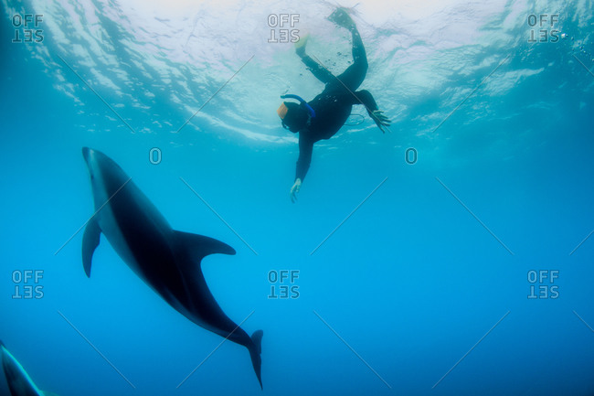Scuba diver swimming with a dusky dolphin