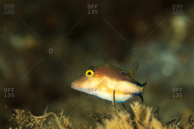 Portrait of a colorful fish