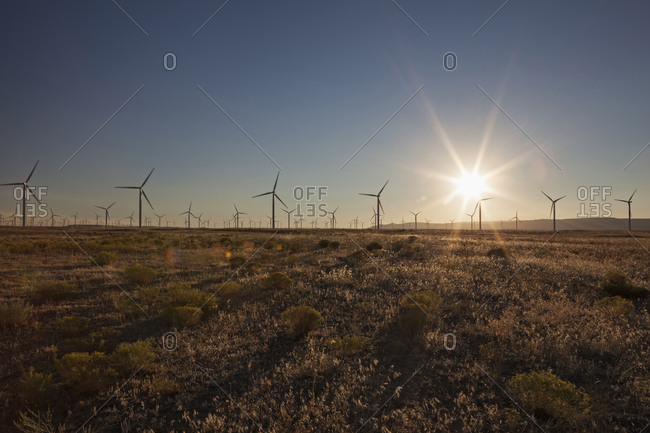 Wind turbines in field at sunset