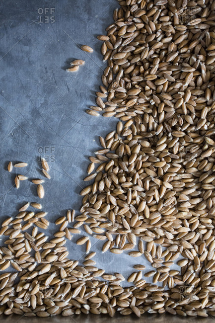 Overhead view of wheat grains