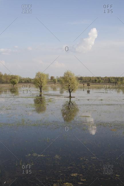 Flooded marsh in Asia